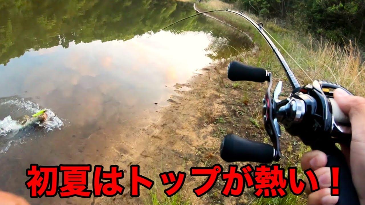 【バス釣り】トップウォーターでデカバスを釣るコツを紹介します。