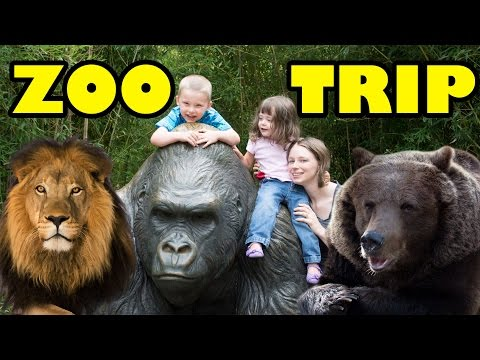 Thumbnail: Zoo Animals - Cute Animals - Funny Animals - An Amazing Zoo Trip