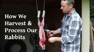 How We Harvest and Process Our Rabbits