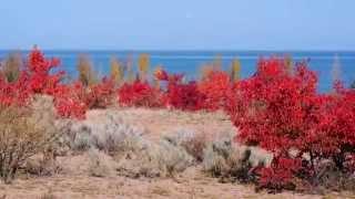 Осенняя палитра Иссык-Куля(И кто бы что ни говорил, октябрь на Иссык-Куле – прекрасное время года, ведь это настоящее буйство красок...., 2015-10-10T06:32:07.000Z)