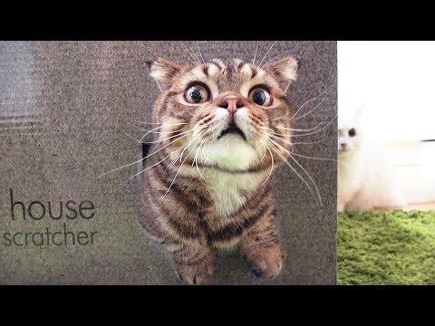루루 고양이에게 비밀 아지트가 생겼어요