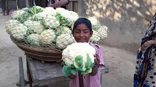 Fresh Vegetables Amazing Village Food || Village Vegetable supplier || Village Lifestyle