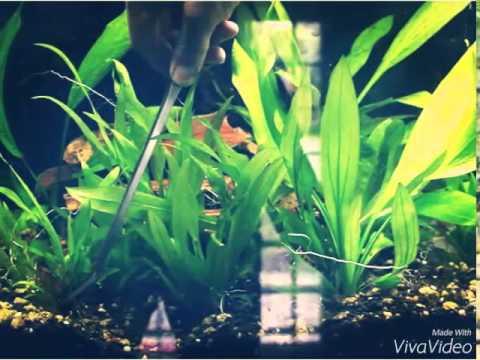 熱帯魚 水草 トリミングステンレス ピンセット 2本+ハサミ セット