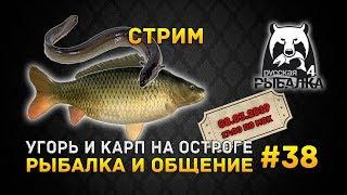 Стрим Русская Рыбалка 4 #38 - Угорь и Карп на Остроге. Рыбалка и Общение