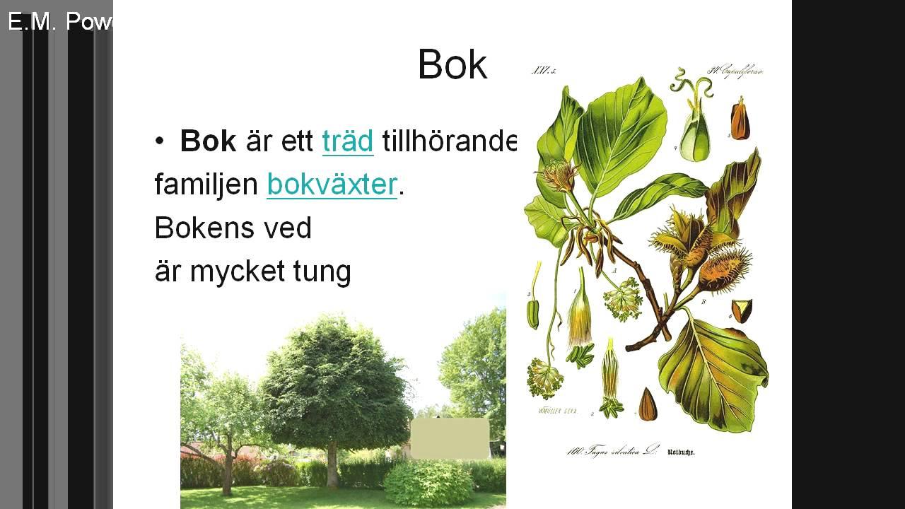 Träd biologi