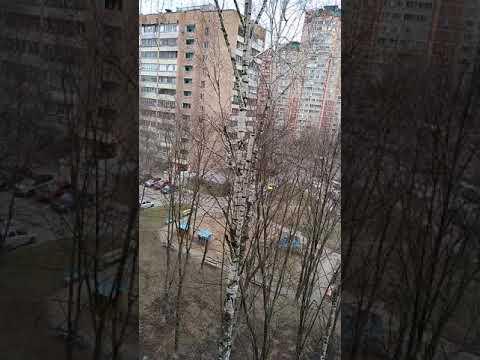 Карантин Моск области Балашиха 2020-04-02