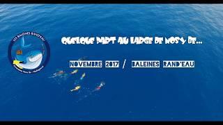 Baleines Rand'eau_TORTUE LUTH ET REQUIN BALEINE_DRONE