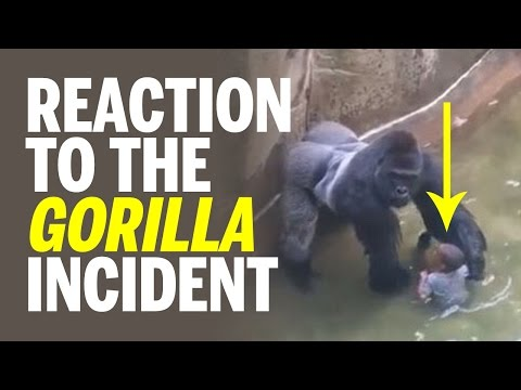 Reaction to Cincinnati Zoo's Harambe The Gorilla Incident; Only Option Was To Shoot - Kill