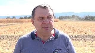 Рекордни добиви от Пионер - царевица в Равно поле