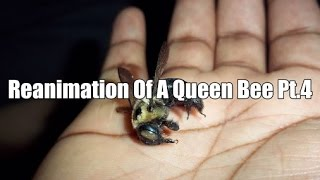 Reanimation of dead queen bee pt4 The last rite