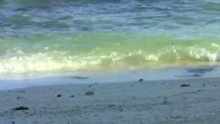 Wave Sounds w Seagulls for Relaxation