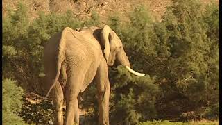 Выжить в дикой природе: африканский взгляд
