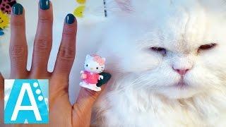 Семья пальчиков Кошки. Finger Family Cat Song. Пальчики Кошки. Хэлло Китти.