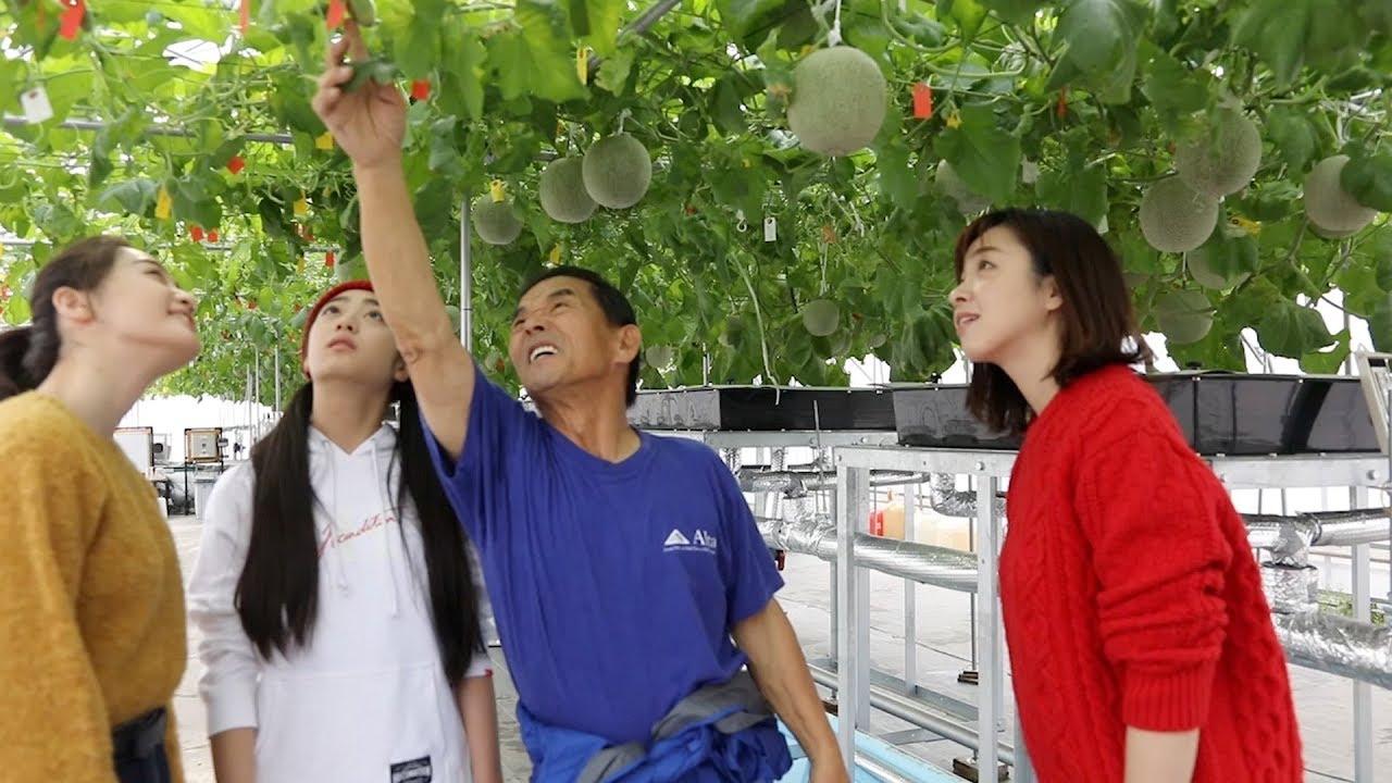 019 酪農家さんが育てたメロン収穫してみた~北海道は牧場日和~
