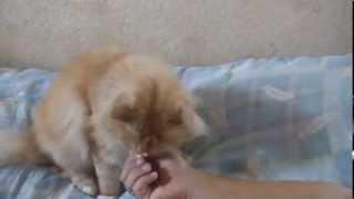 Кошке не дали валерьянку. www.GruzoGazel.ru