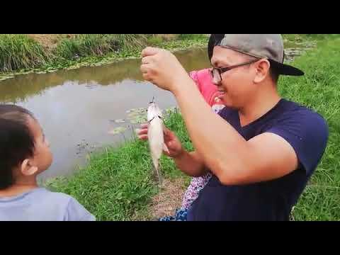 Ikan Cupang Itu Apa