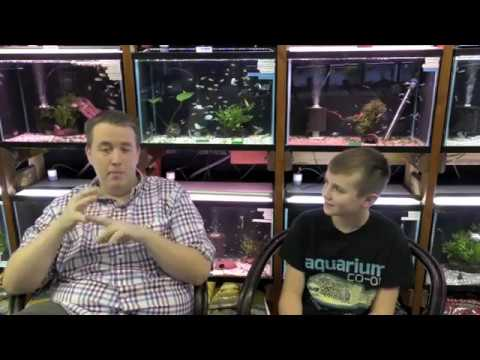 Cory McElroy of Aquarium Co-Op Interview