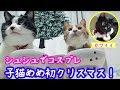<2匹の猫通信>ハッチとマックの「ほっこりライブ」子猫めめ初クリスマス!カワイイ!2018 12 24 - Cats Live in the bedroom.LIVE Stream.
