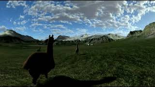 Video 360 Alpaca
