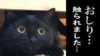 【事案】女の子のお尻がオス猫に触られる凶悪事件が発生…!?