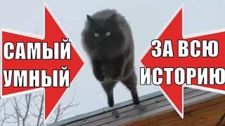 Чернуха самый умный кот в мире за всю историю the smartest cat in the world