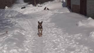 Ультразвуковой отпугиватель собак из Китая на AliExpress