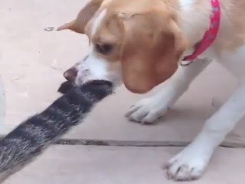 Cat Vs. Dog! The EPIC Battle Begins! Funny Dog and Cat Video!