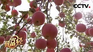 《致富经》 20201228 村里来了个点子王| CCTV农业 - YouTube
