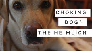 Choking Dog? How To Do The Heimlich