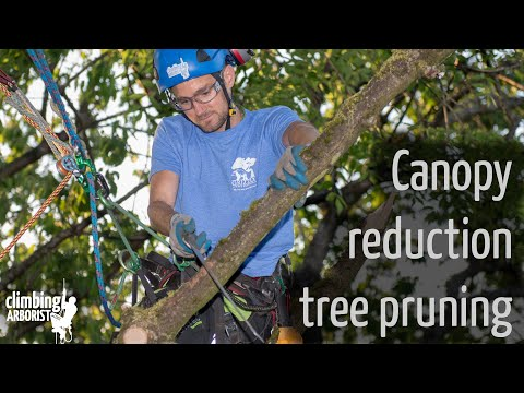 Canopy Reduction Tree Pruning