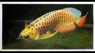 Arowana Golden Dragon Fish  24k 1 year old