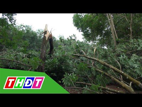 Giông lốc gây thiệt hại cây trồng, nhà cửa ở Bình Dương | THDT