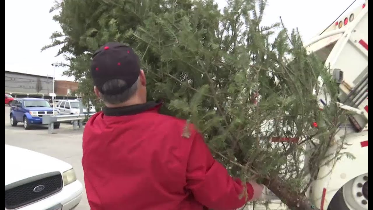 How to properly dispose of a Christmas tree in Columbus ...