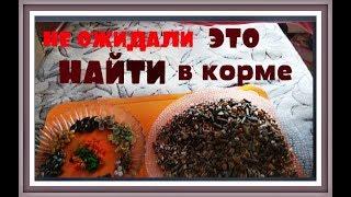 КОРМ ДЛЯ ХОМЯКОВ Чем кормить хомяка Хомяк домашний содержание  и питание