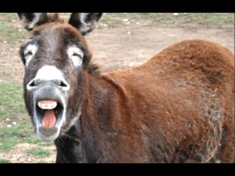 Animals Making Funny Noises - A Funny Animal Sounds Compilation 2016