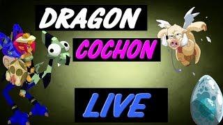 Dofus Donjon en Live. Dragon Cochon avec Bryophyta