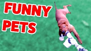 Funniest Cute Pets & Animals Bloopers Caught On Tape | Funny Pet Videos thumbnail