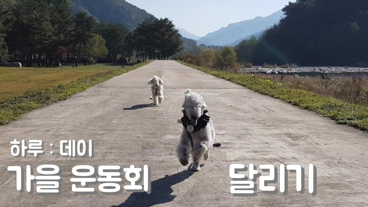 강아지 가을운동회 -달리기