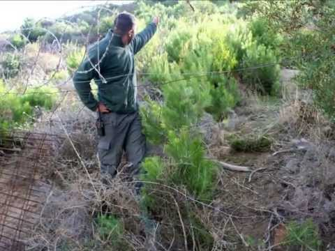 The Story of Illicit Harvesting in Cape Town