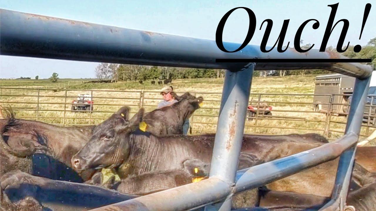 Farmer Gets RUN OVER by Cow!!