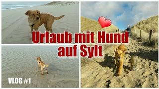 VLOG #1/ Urlaub mit Hund / Sylt