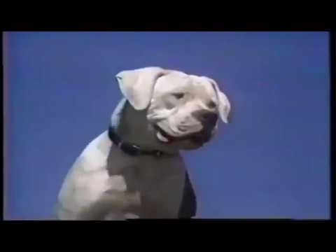 Disney's Homeward Bound: The Incredible Journey TV Spot (1993) (widescreen)