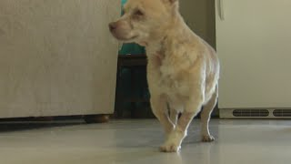 Missing dog reunited with Albuquerque family after found in another state, 3 years later