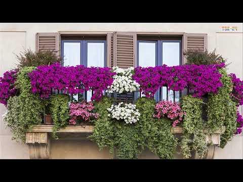 Best Small Balcony Garden Design Ideas - Beautiful House