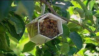 """Hotel dla... pszczół, """"Fakty"""