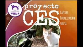 Pasos para construir casetas para gatos callejeros