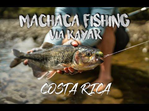 Costa Rica Fly Fishing For Machaca Via Kayak