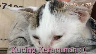 Kucing Keracunan!!! Perawatan pertama jika kucing keracunan, jangan biarkan kesayangan anda mati!!!