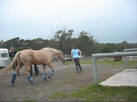 Horses with Floaty BOOTIES!!!