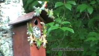 Cuckoo Clock Nest Box, Sensor Controlled Sound